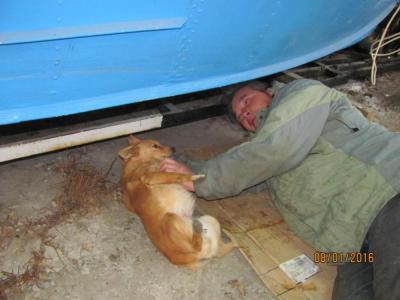 Собака работать недавака.jpg