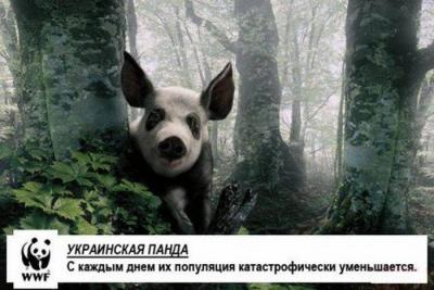 97753334_1326420460_podborka_07.jpg