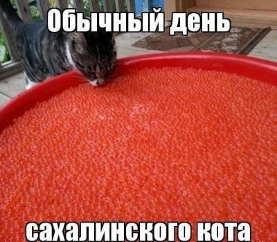 сахалинский кот.jpg
