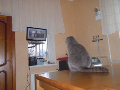коты собираюся 001.jpg