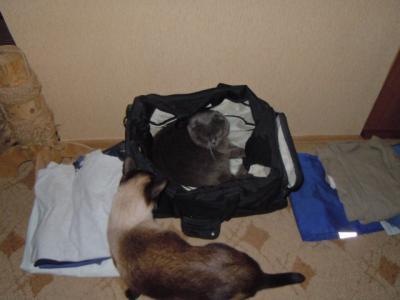 коты собираюся 005.jpg