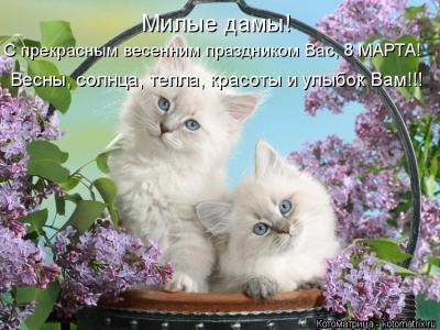 kotomatritsa_2.jpg