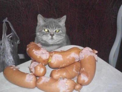 cat_eat.jpg