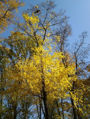 2012-10-21 12.41.34.jpg