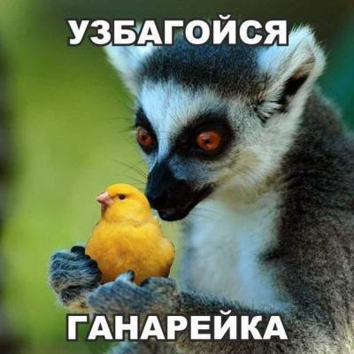 1437001585_zhiv.jpg