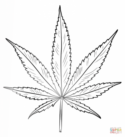 808810-maple-leaf-coloring-page-printable.png