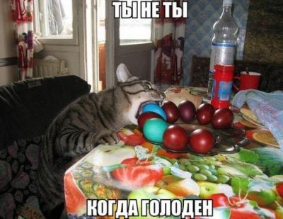 cat_egg.jpg