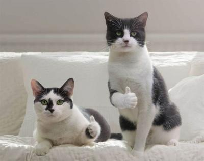 коты одобряэ.jpg