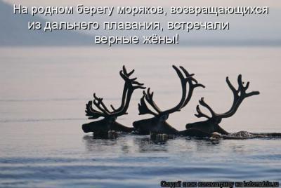 kotomatrix_50.jpg