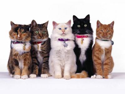 Cat_breeds.jpg