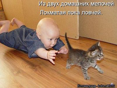 kotomatritsa_0z.jpg