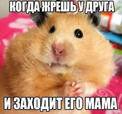1406046320_podborka_41.jpg