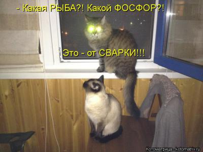 kotomatritsa_Ok.jpg
