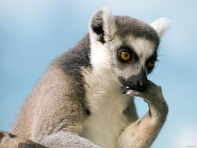 lemur_5_1600.jpg