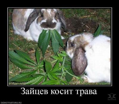 1349477318_demotivators_00.jpg