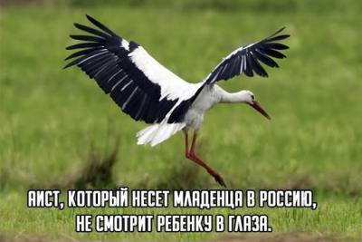 1385011487_1-15.jpg