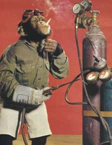 Monkey with a welding torch.jpg