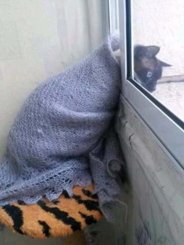 heat_cat.jpg